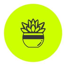 Succulent Studios Logo